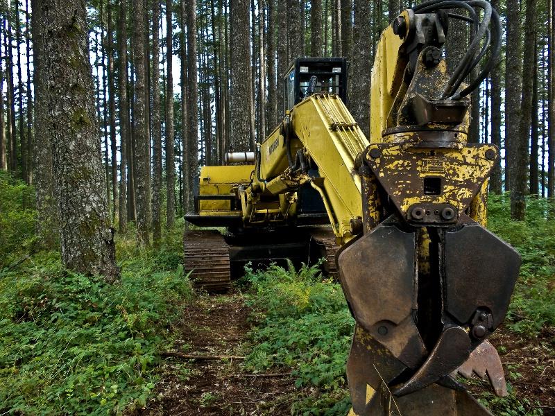 One Big Finger Pincher, Logging-Oregon