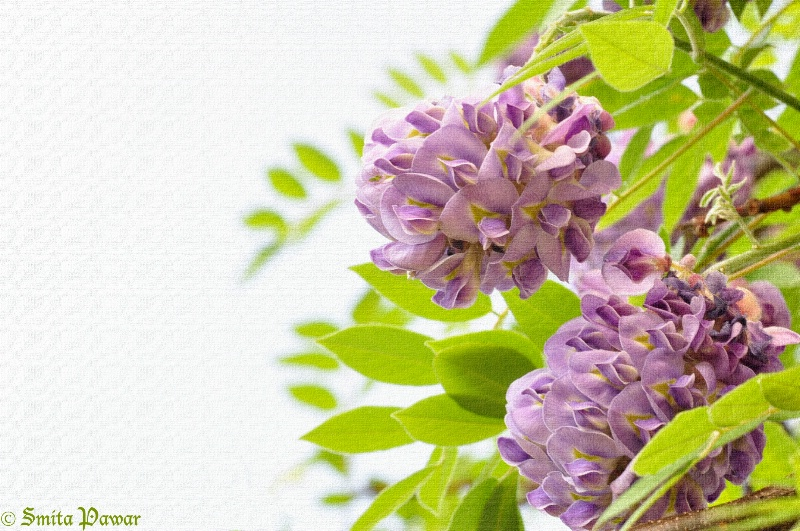 Purple Clusters