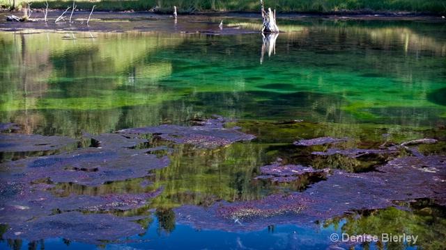 Thermal Pond - ID: 8863296 © Denise Bierley
