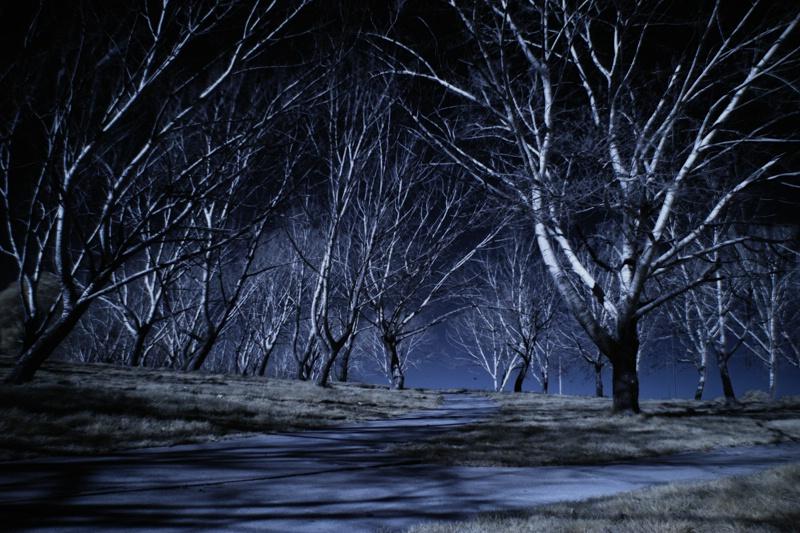 Which Path? - ID: 8866284 © Debbie Hartley