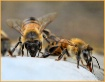The Worker Bees
