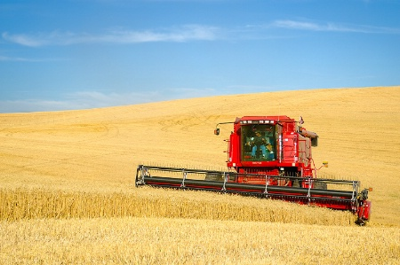 Palouse Wheat Harvest