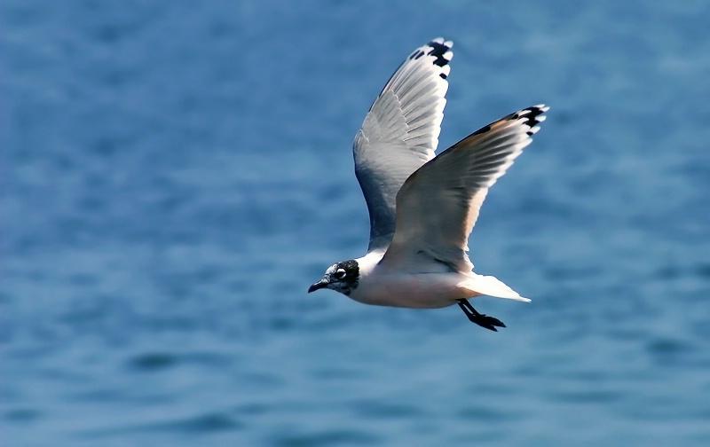 Nature - A gull 2
