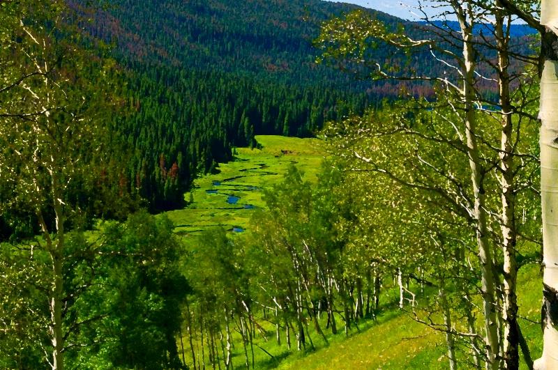 Piney River Colorado