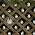 2The Peeples vs. Jay Dour (colour version)  - ID: 8885154 © Eric Highfield