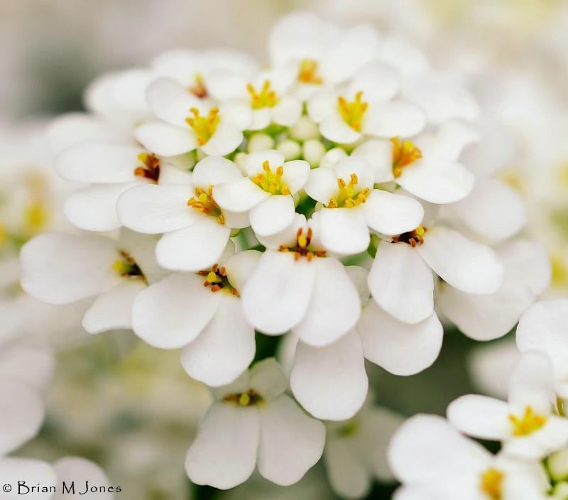 The Softest White