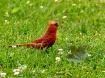 The Cardinal and ...