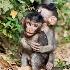 © Anne M. Young PhotoID # 8899133: Hug me