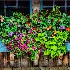 2The Artful Planter - ID: 8904134 © Eric Highfield