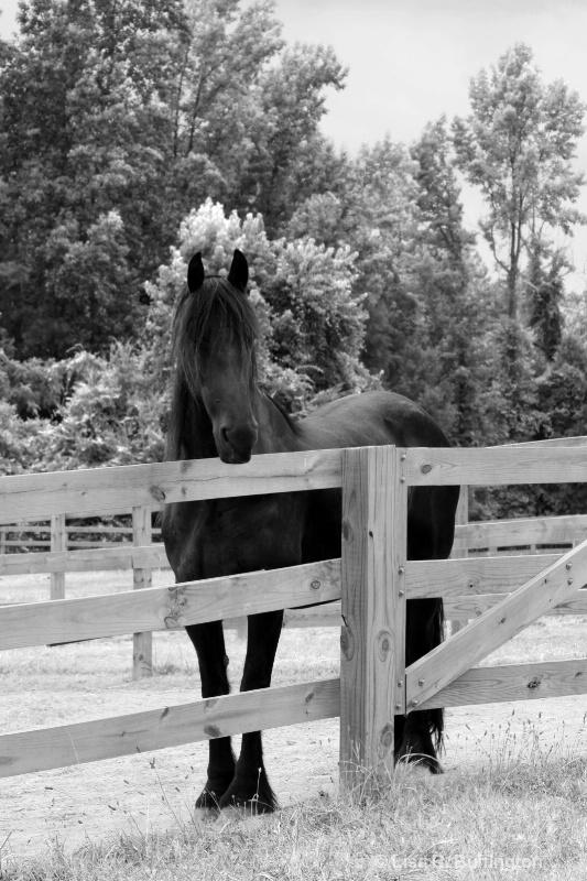 Black Beauty - ID: 8907429 © Lisa R. Buffington