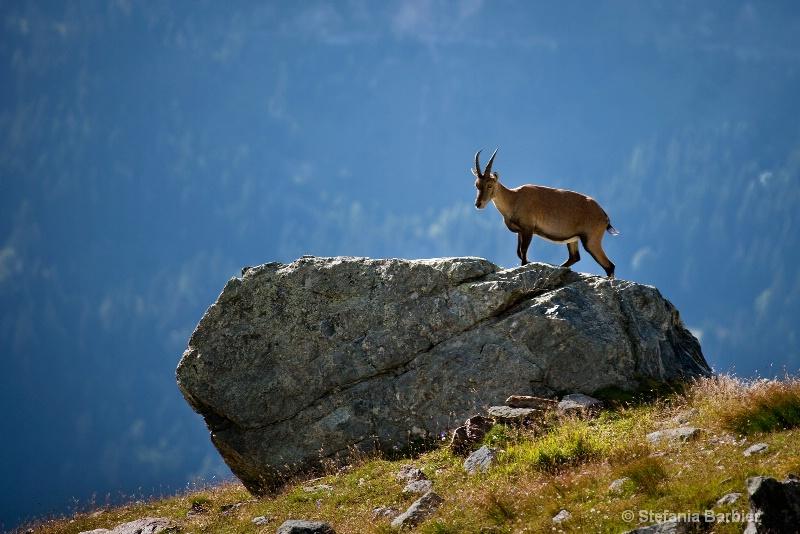 queen of Mt. Blanc - ID: 8926159 © Stefania Barbier