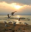 Sunset  Seagulls