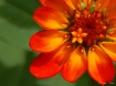 Orange-Ade