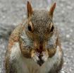 A Squirrel's ...