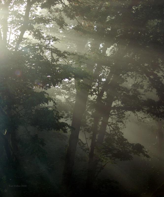 First Fog
