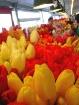 Yellow & Red Tuli...