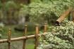 Bamboo fenceline