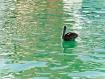 Pelican, Puerto A...