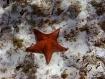 Sea Star, Cielo R...