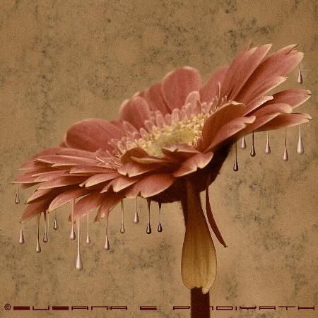 The Melting Flower