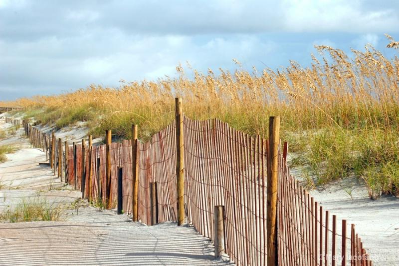 BEACH  DUNES - ID: 9064557 © Mary Iacofano