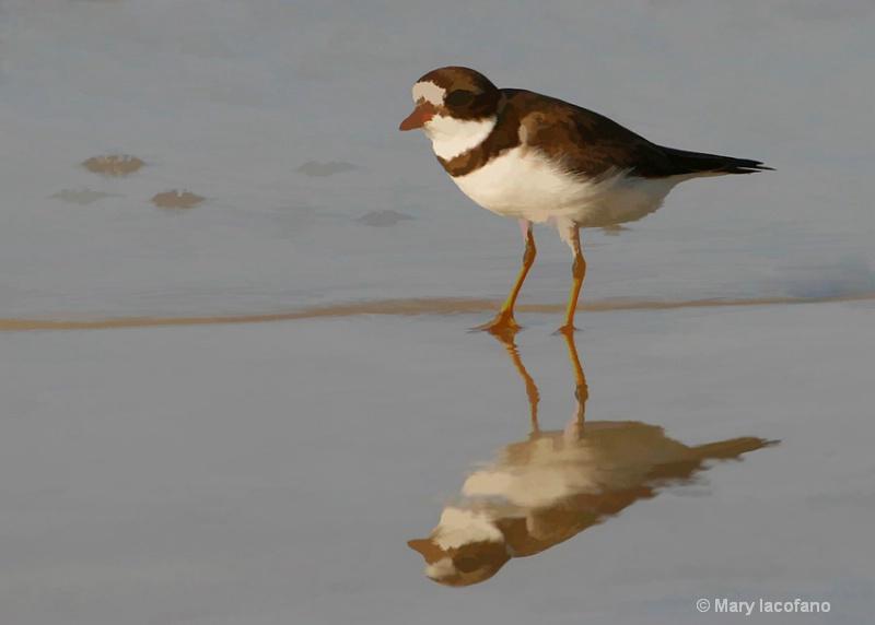 BEACH BIRD REFLECTION - ID: 9064561 © Mary Iacofano