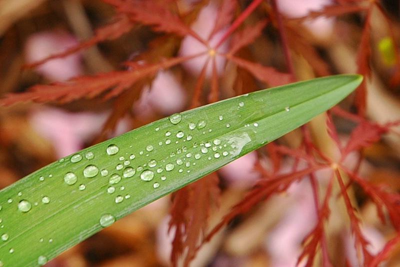 Raindrop party - ID: 9072717 © Susan Cohen