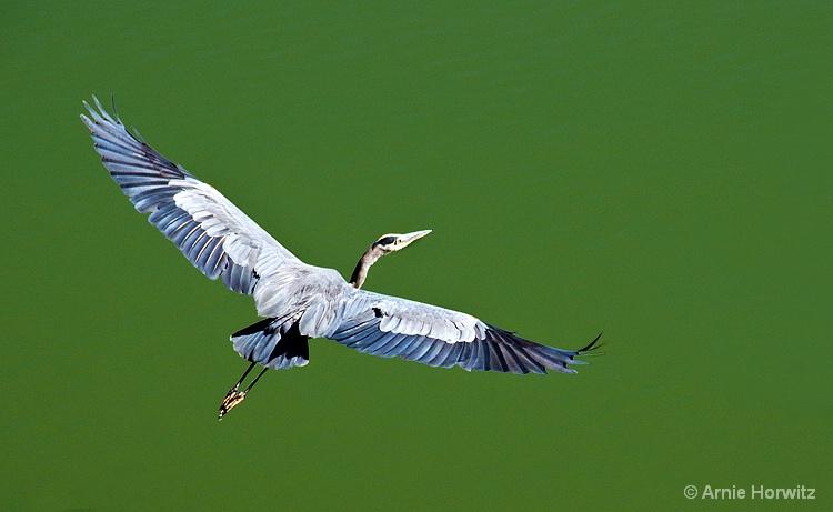 Takeoff - II - ID: 9073943 © Arnie Horwitz