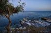 Limassol Shot