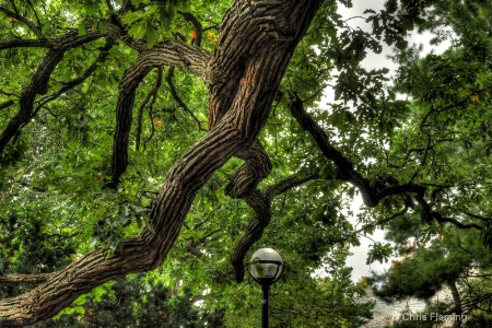 Protective Oak