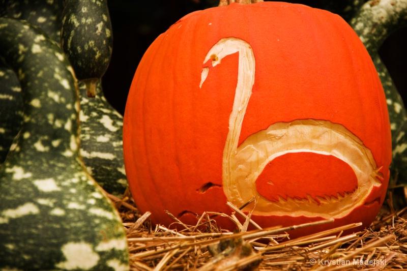Swanlake pumpkins - ID: 9089882 © Krystian Madejski