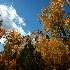 © Sharon L. Langfeldt PhotoID # 9137636: Autumn
