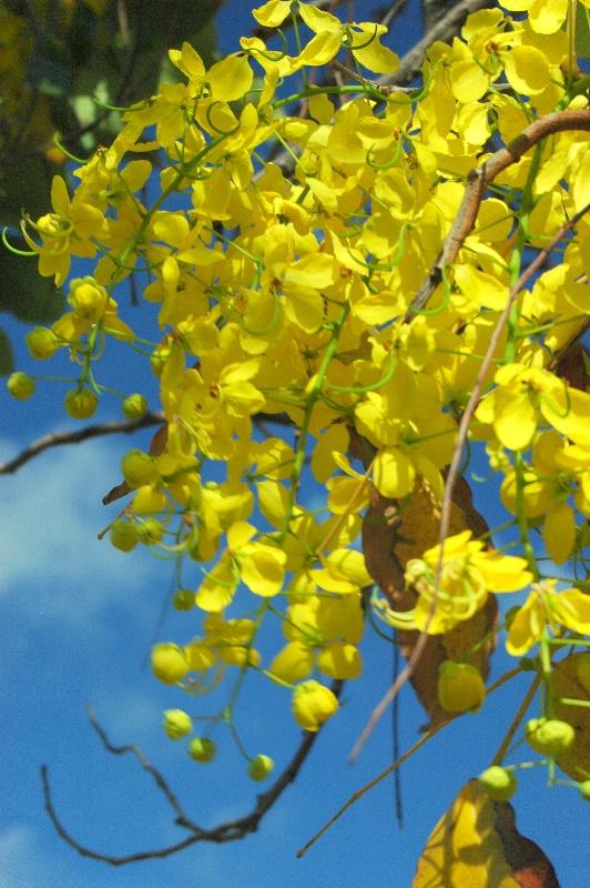 Golden flower cascade - St John