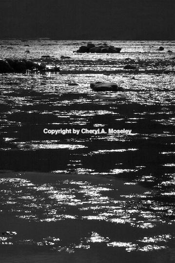 - ID: 9165331 © Cheryl  A. Moseley
