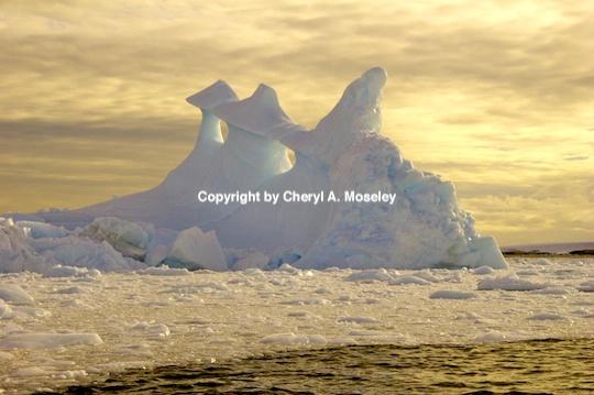 - ID: 9165600 © Cheryl  A. Moseley