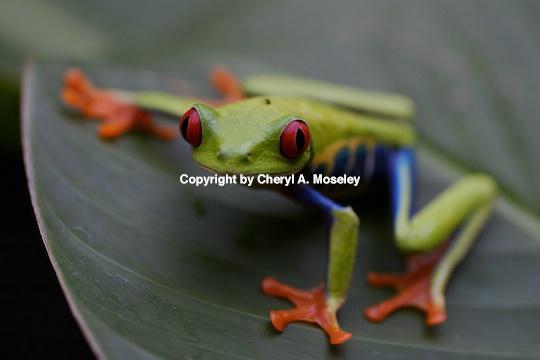 - ID: 9171810 © Cheryl  A. Moseley