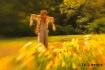 Scarecrow On Watc...