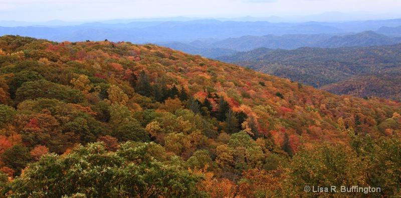 Blue Ridge Parkway Mountain Foliage - ID: 9197956 © Lisa R. Buffington