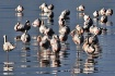 flamigo birds