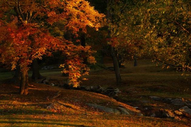 Autumn Mornings Glow