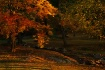 Autumn Mornings G...