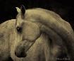 Equine Curves
