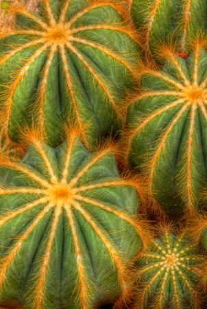 Cactus Union