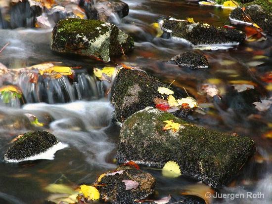 AP-013: Duck Pond Brook - ID: 9231600 © Juergen Roth