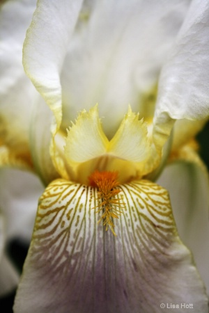 Beauty of the Iris