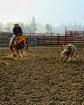 Cutting Horse 4