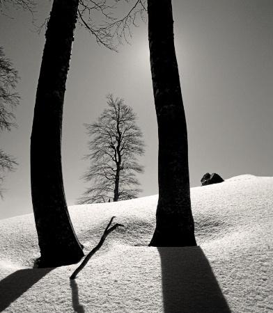 Framed Beech Tree