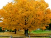 Yellow the Fall C...