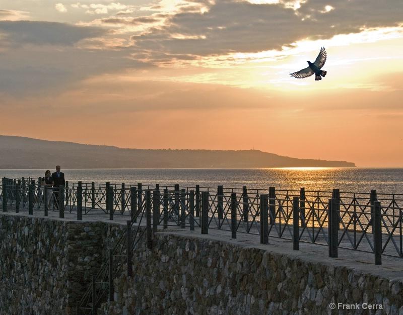 sunset pigeon