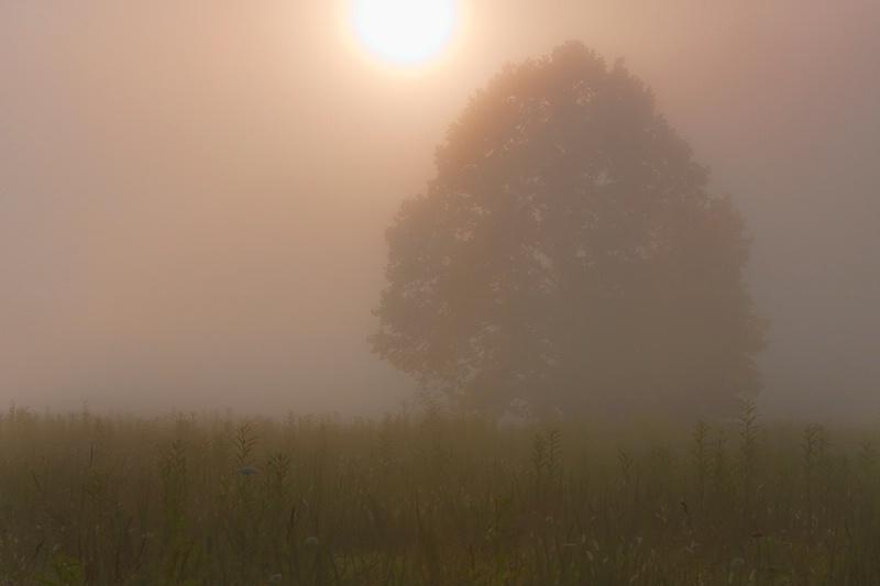 Foggy Sunrise - ID: 9282539 © John Singleton